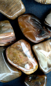 Petrified Wood Tumbled for sale click here for more info