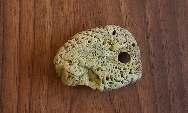 Coral Natural Hag Stone 31 Grams Energy In Balance You will find a high quality stone coral at an affordable price from brands like celadon. energy in balance